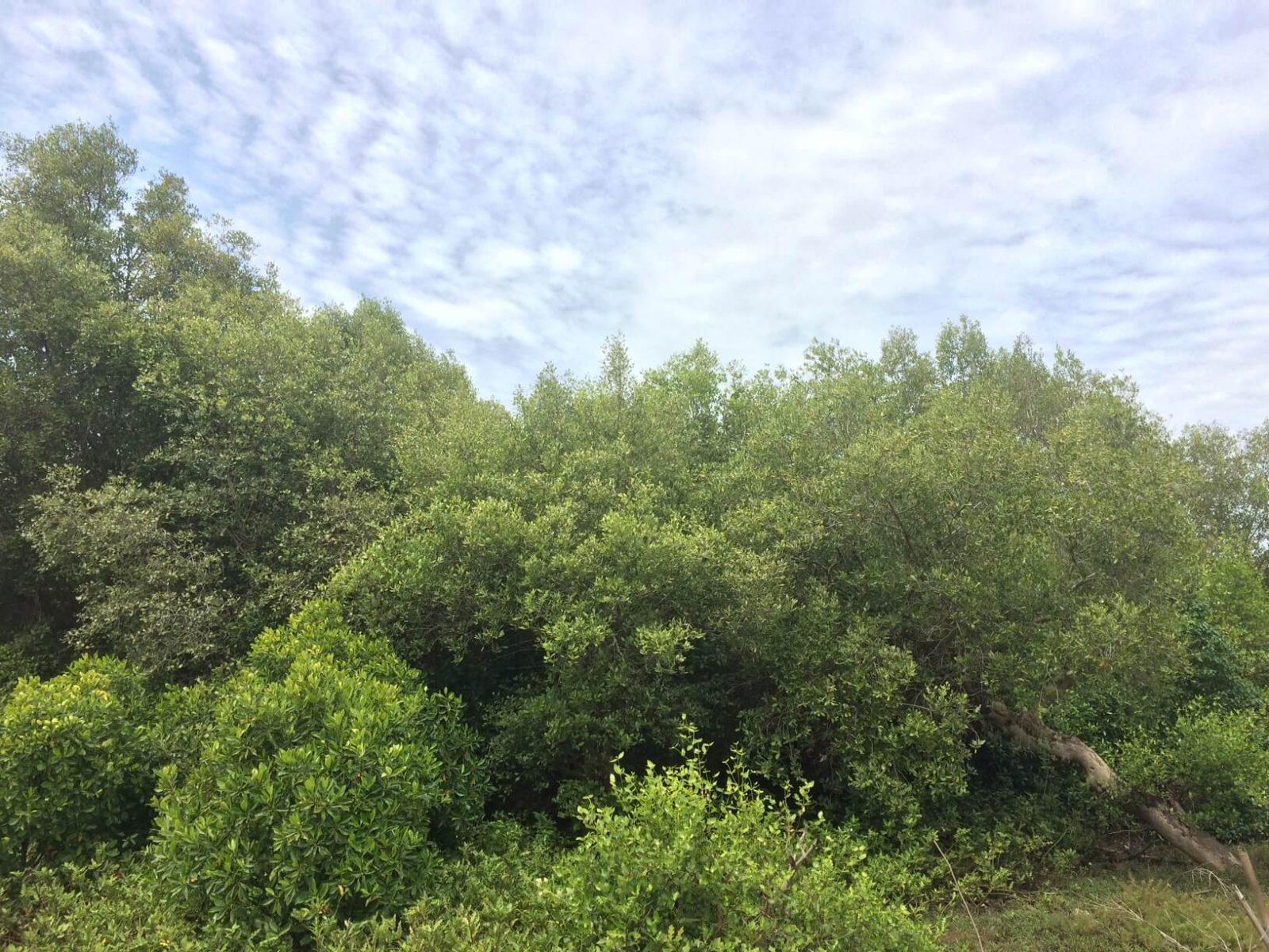 Open Share Cost Trip Ke Kawasan Cagar Alam Pulau Burung Dua Serang Banten