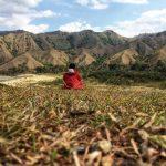 Desa Ollon Toraja